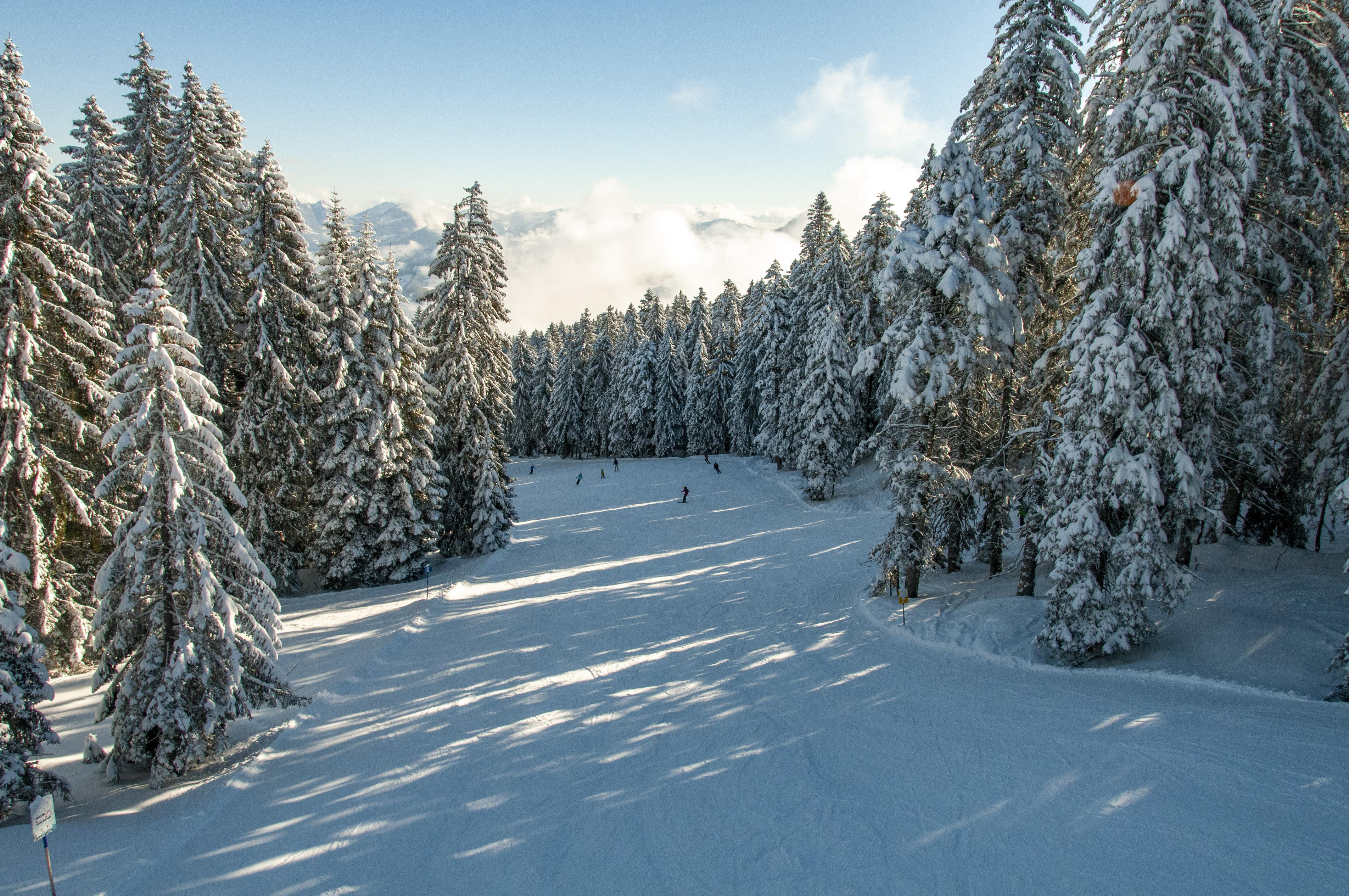 Skigebiet Bödele, Lank, Waldabfahrt / Copyright© Jürgen Kostelac, Tarifgemeinschaft Bödele